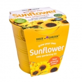 Galvanized Pot - Zinc Pot Sunflower