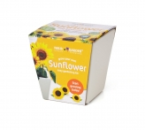Glazed Ceramic Pot - SUNFLOWER